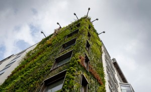 The Athenaeum Hotel's Living Wall (photo courtesy of Athenaeum Hotel)